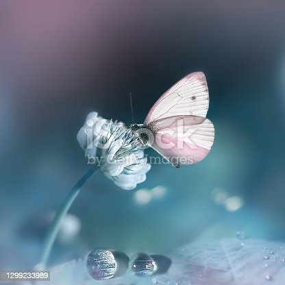 Spring summer natural background. Pink delicate butterfly and white clover flowers in a fantastic garden. Pastel tone. Square image.