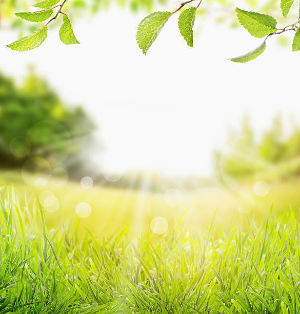spring summer nature background with grass, trees and  sun rays stock photo