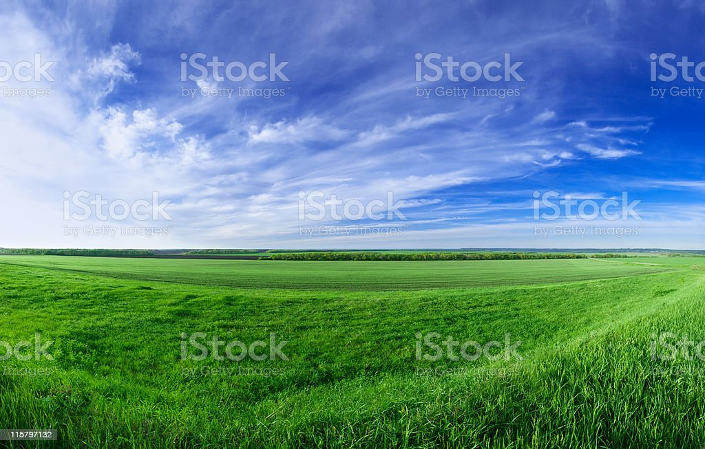 Spring sunny day landscape royalty-free stock photo