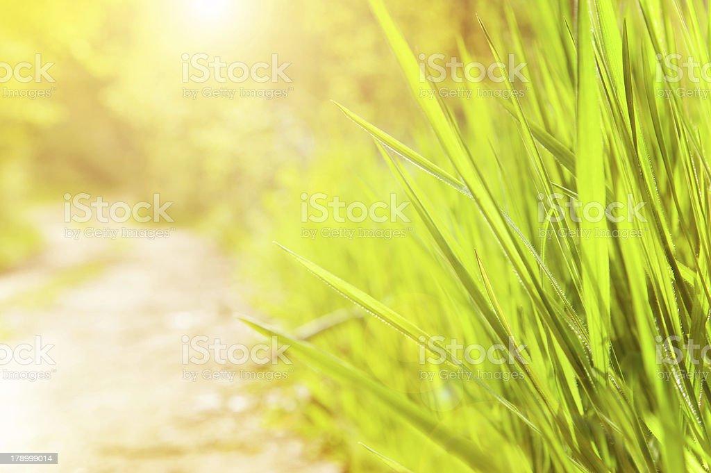 Spring sunny day royalty-free stock photo