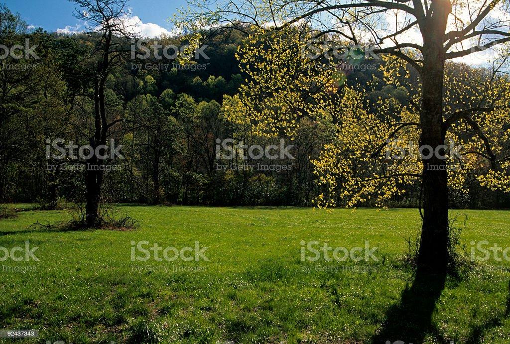 Spring Sunshine, Tree, Oconaluftee, NC royalty-free stock photo