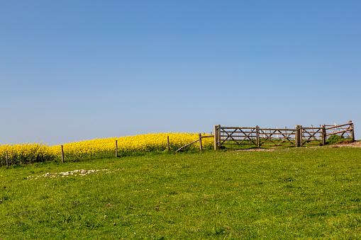 Lente Sussex Landschap Stockfoto en meer beelden van Boerderij