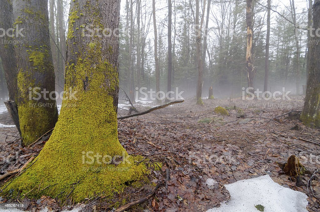 Spring Thaw with Fog 2 stock photo