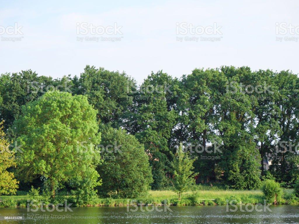 lentetijd aan een meer in Duitsland - Royalty-free Boom Stockfoto