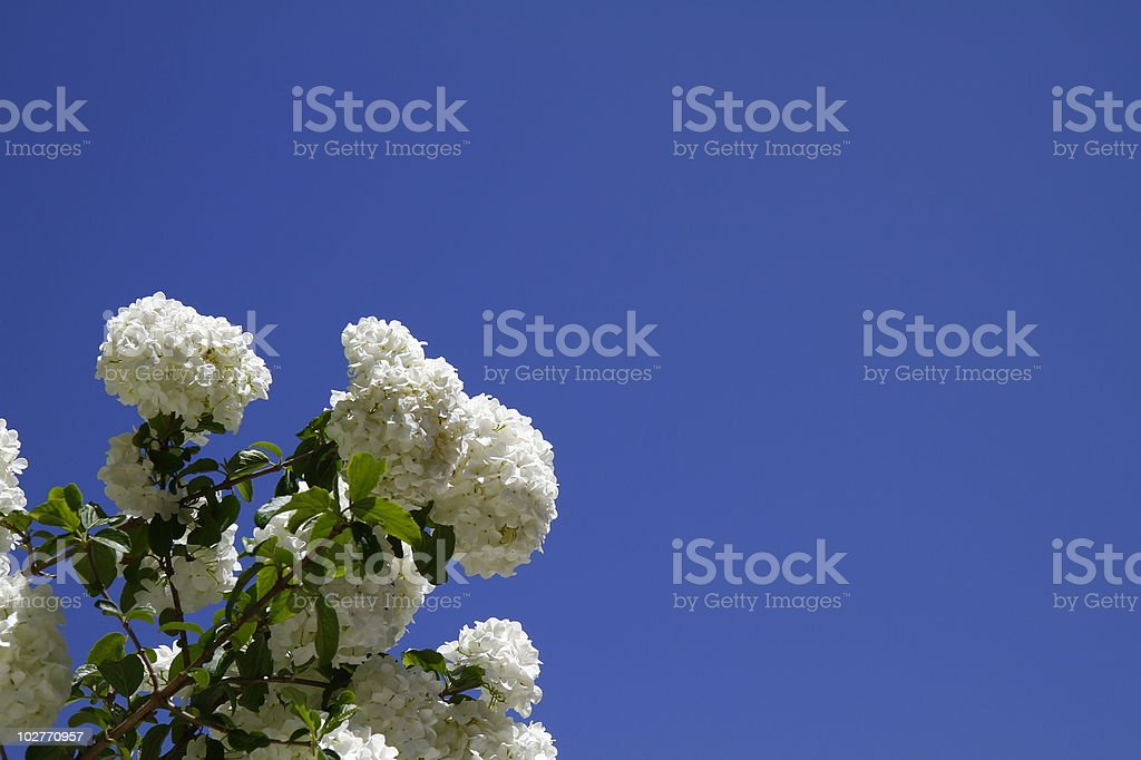 Spring Time Blooms royalty-free stock photo