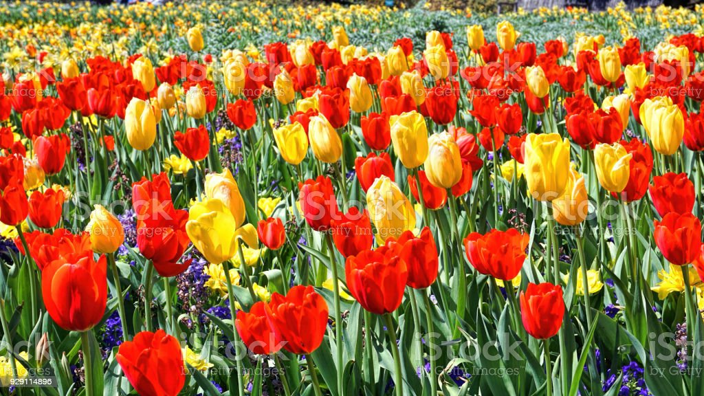 Spring Time Blooms. stock photo