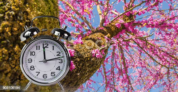 905623256 istock photo spring time clock flowers nature space for your text , background 905106194
