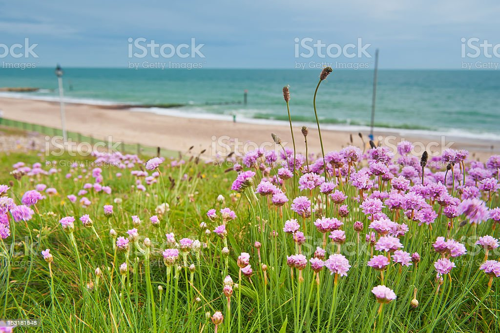 Spring Time Clover Meadow on Cliff at seaside in Bournemouth stock photo