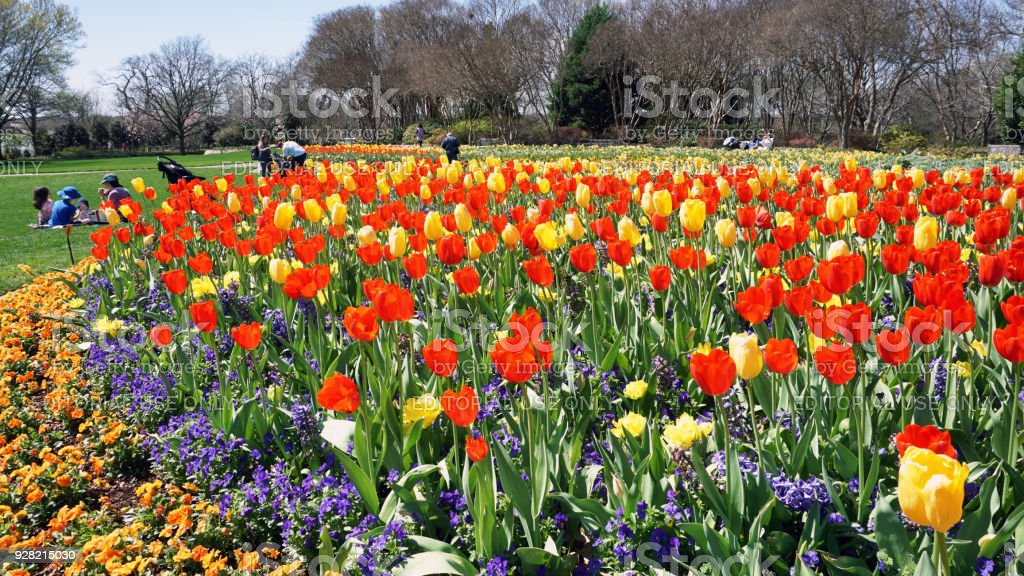 Spring Time in Texas. stock photo