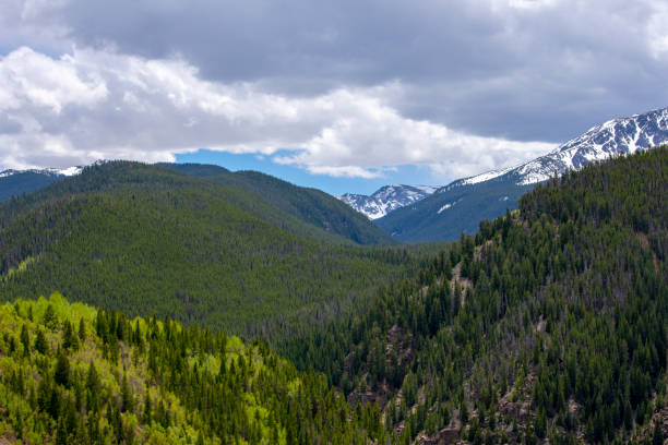 Spring Time in the Colorado Rocky Mountains Aspen and spruce trees Rocky Mountain forest. minturn colorado stock pictures, royalty-free photos & images