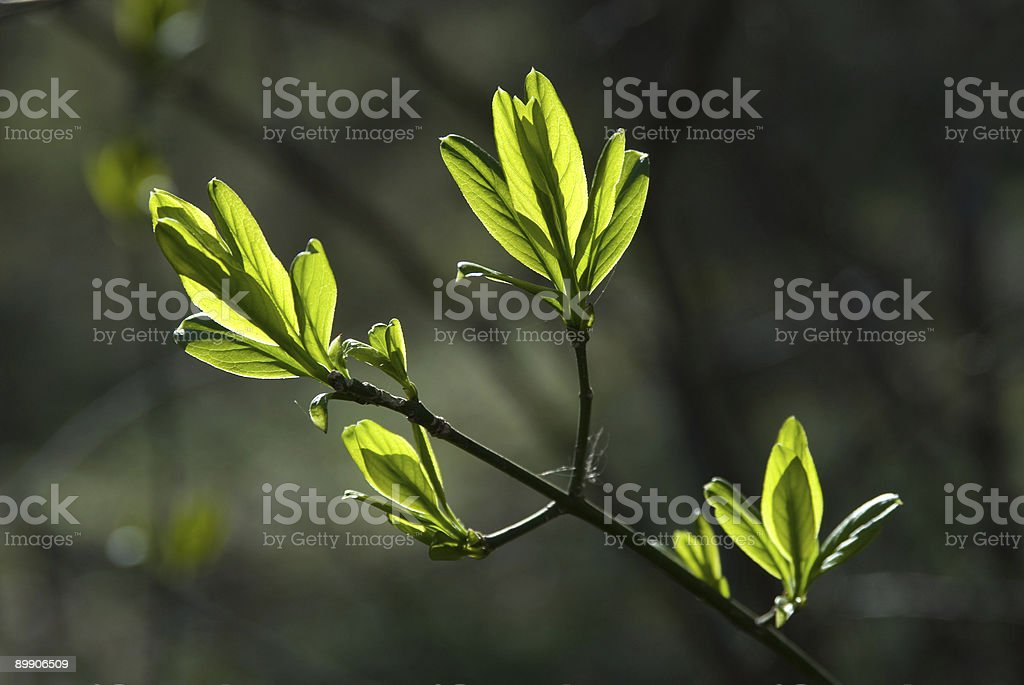 Frühling Zeit im Wald Lizenzfreies stock-foto