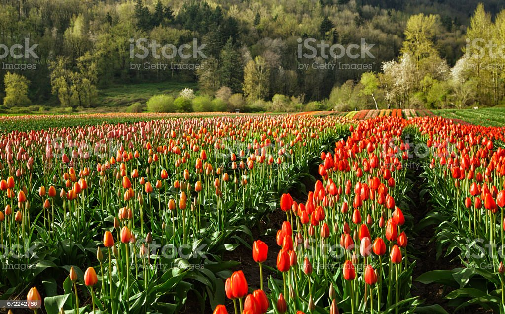 Spring time in the Fraser Valley, Abbotsford, BC, Canada stock photo