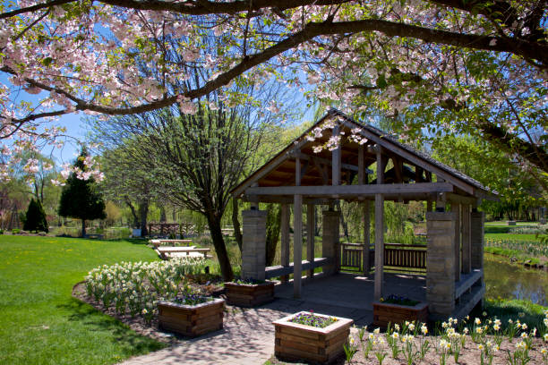 spring time in the park stock photo