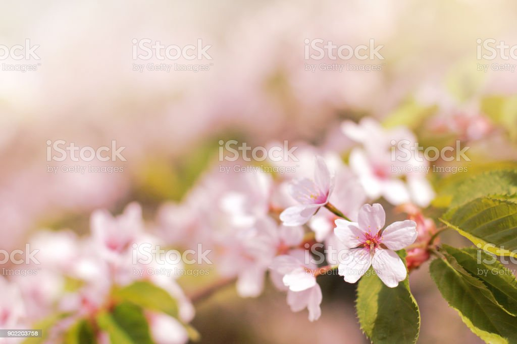 spring time of the year stock photo