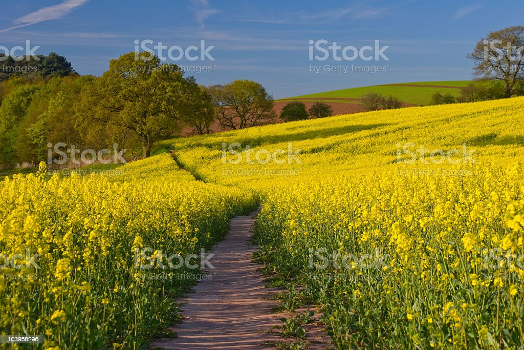 Spring Time stock photo