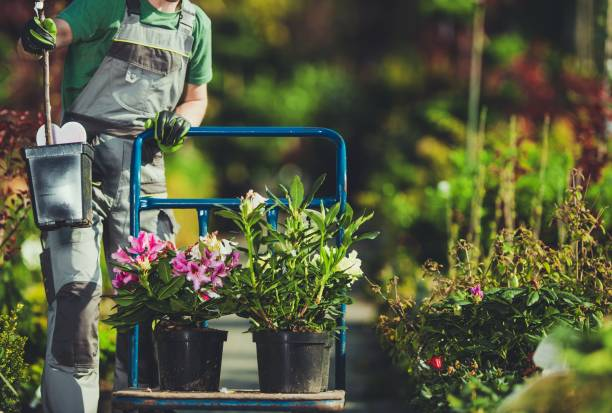 Spring Time Plants Shopping Spring Time Plants Shopping. Caucasian Gardener with Cart in the Garden Department Store. landscaped stock pictures, royalty-free photos & images