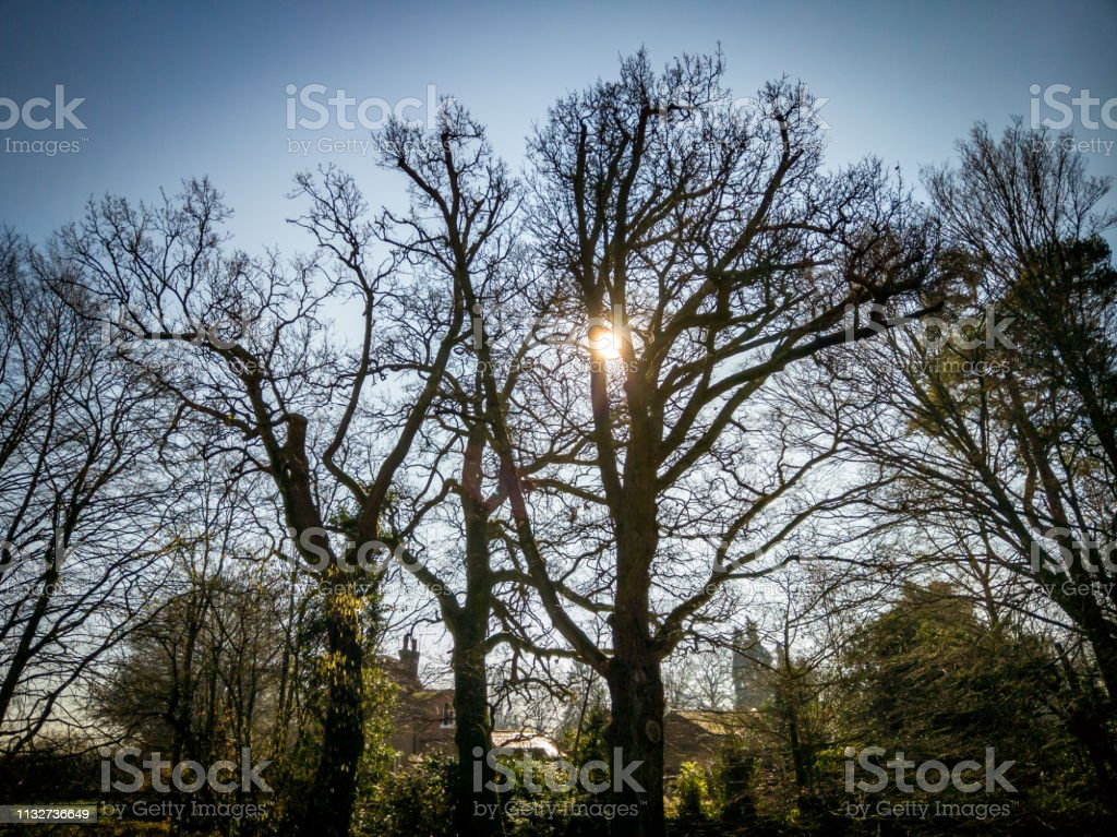 Spring time sun through trees on a sunny day stock photo