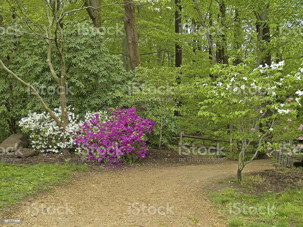 Spring Trail royalty-free stock photo