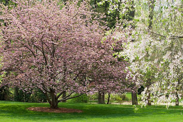 Spring tree blooms picture id91603380?b=1&k=6&m=91603380&s=612x612&w=0&h=mstb0hzhlsf66tbjgcjy782eyhijijj0ciajw3kyc8i=