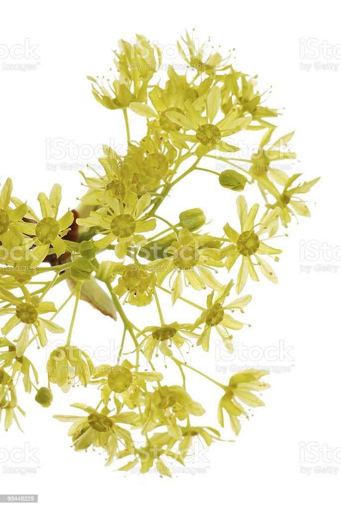Frühlings-Blumenmuster Lizenzfreies stock-foto