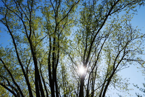 Spring tree branches stock photo