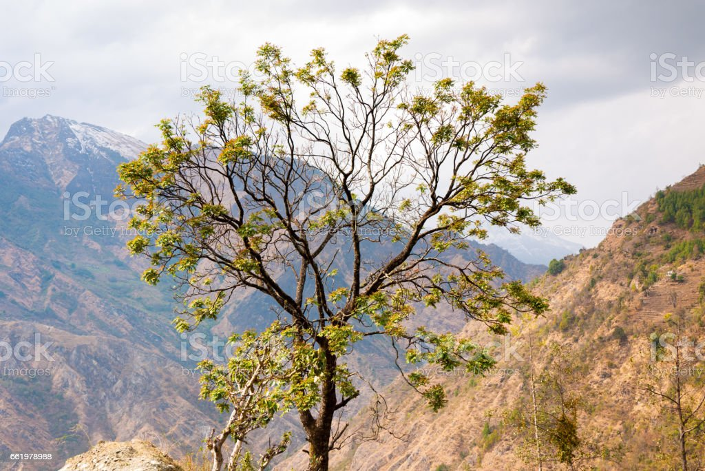 Spring tree in mountains royalty-free stock photo