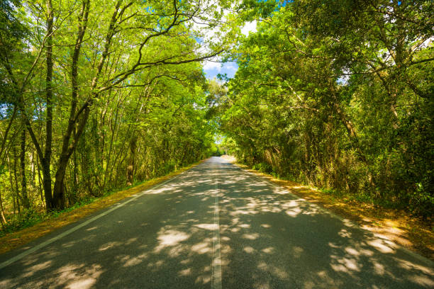 Spring, tree straight road on sunset. Maremma, Tuscany, Italy - foto stock