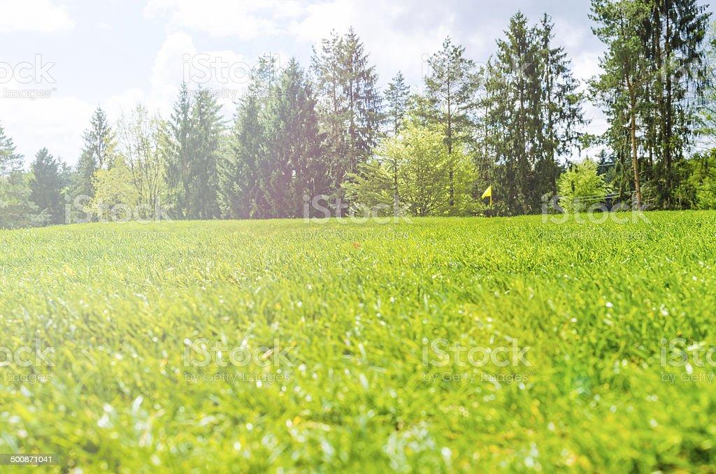 Spring Treeline Landscape royalty-free stock photo