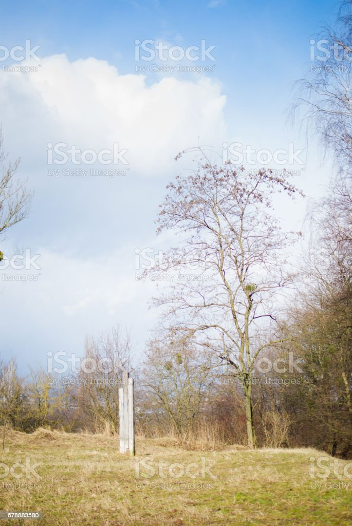Bahar ağaçları ve yeşil çim. Yumuşak beyaz-mavi gökyüzü royalty-free stock photo