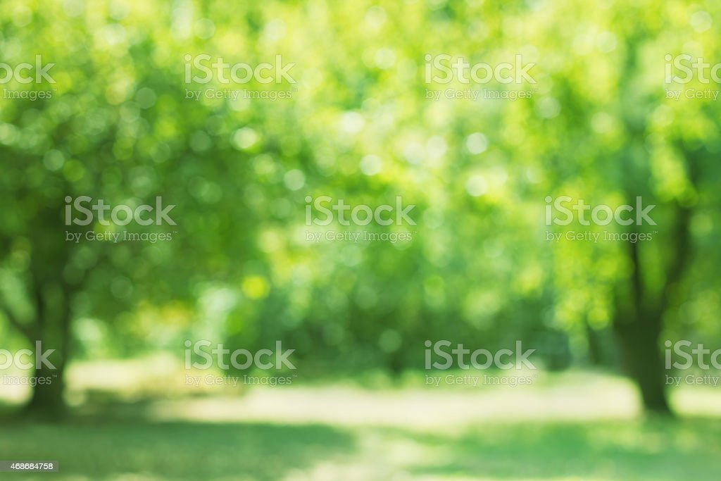 spring trees birch out of focus, natural bokeh background stock photo