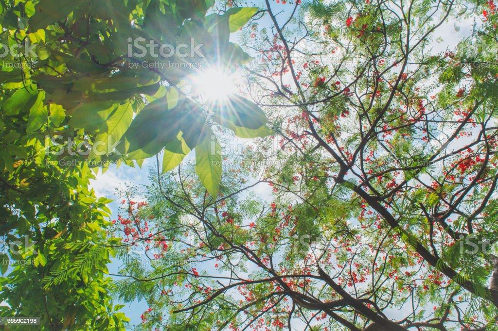 Spring trees in the sunshine - Стоковые фото Без людей роялти-фри