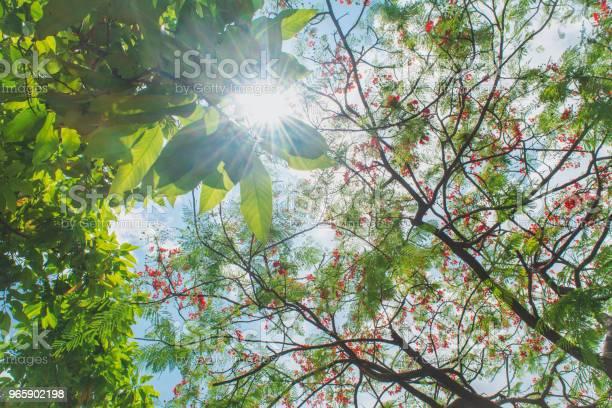 Весенние Деревья На Солнце — стоковые фотографии и другие картинки Без людей