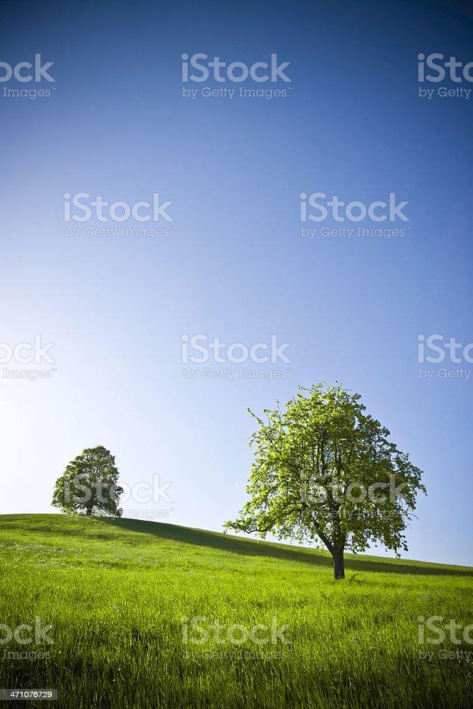 Spring Trees royalty-free stock photo