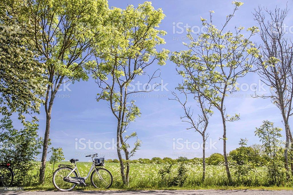 Весенние деревья с велосипеда стоковое фото