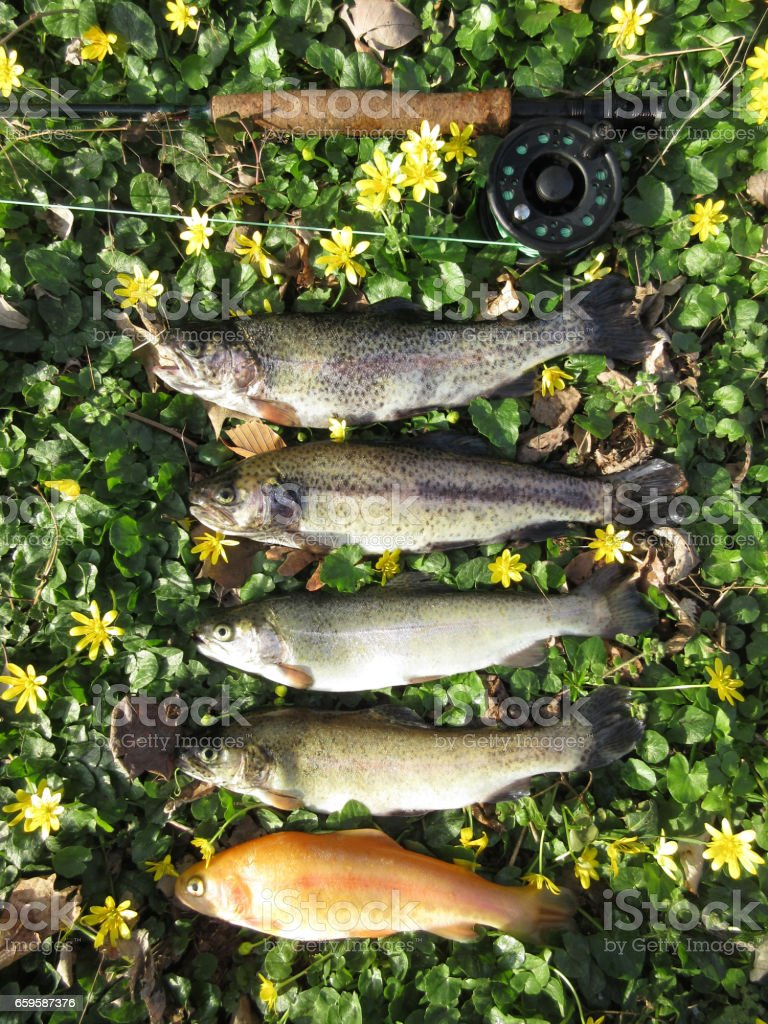 Spring Trout Bounty stock photo