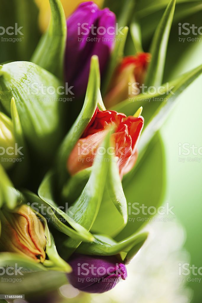 Spring tulip bouquet royalty-free stock photo