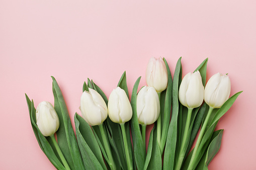 Spring tulip flowers. Greeting for Womens, Mothers Day. Flat lay.