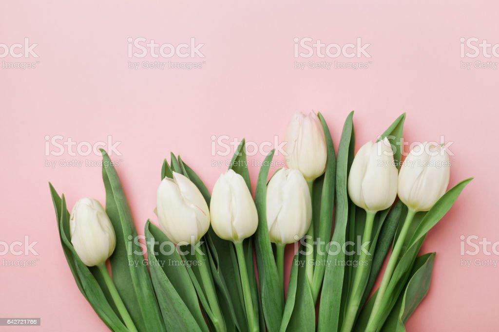 Flores de tulipán primavera. Saludo para las mujeres, las madres de día. La endecha plana. - foto de stock