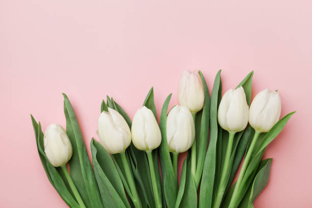 Spring tulip flowers. Greeting for Womens, Mothers Day. Flat lay. stock photo