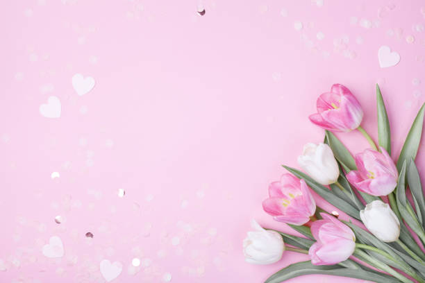Spring tulip flowers on pastel pink background top view. Greeting card for International Women Day or Mother day. stock photo