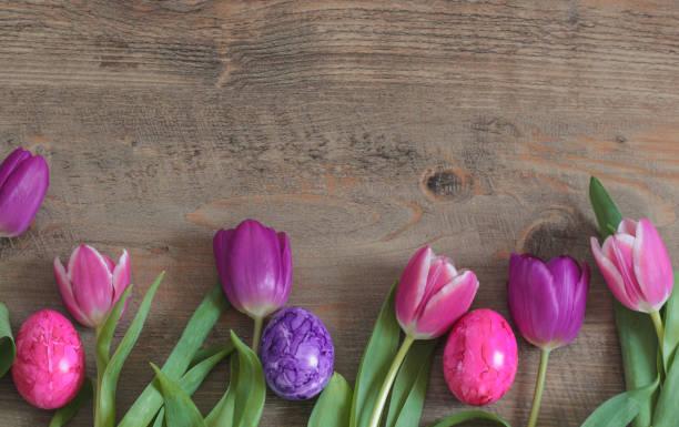 spring tulips and easter eggs - buona pasqua in tedesco foto e immagini stock