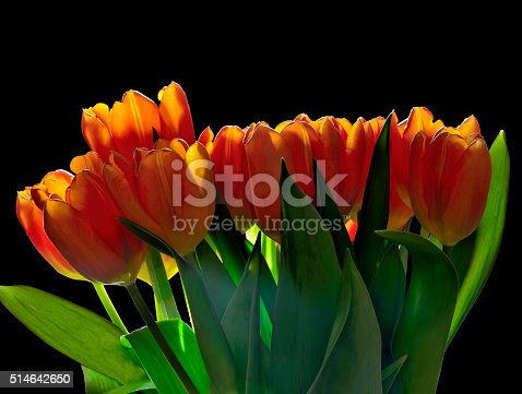 istock Spring tulips bouquet with backlight of sunrays 514642650