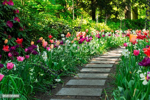 Colourful Tulips and spring flowers mixed Flowerbeds, green grass and Stone Pathway in Formal Garden, toned