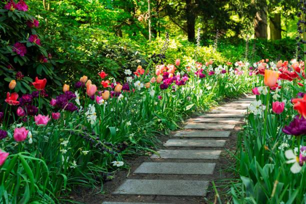 Spring Tulips Flowerbeds stock photo