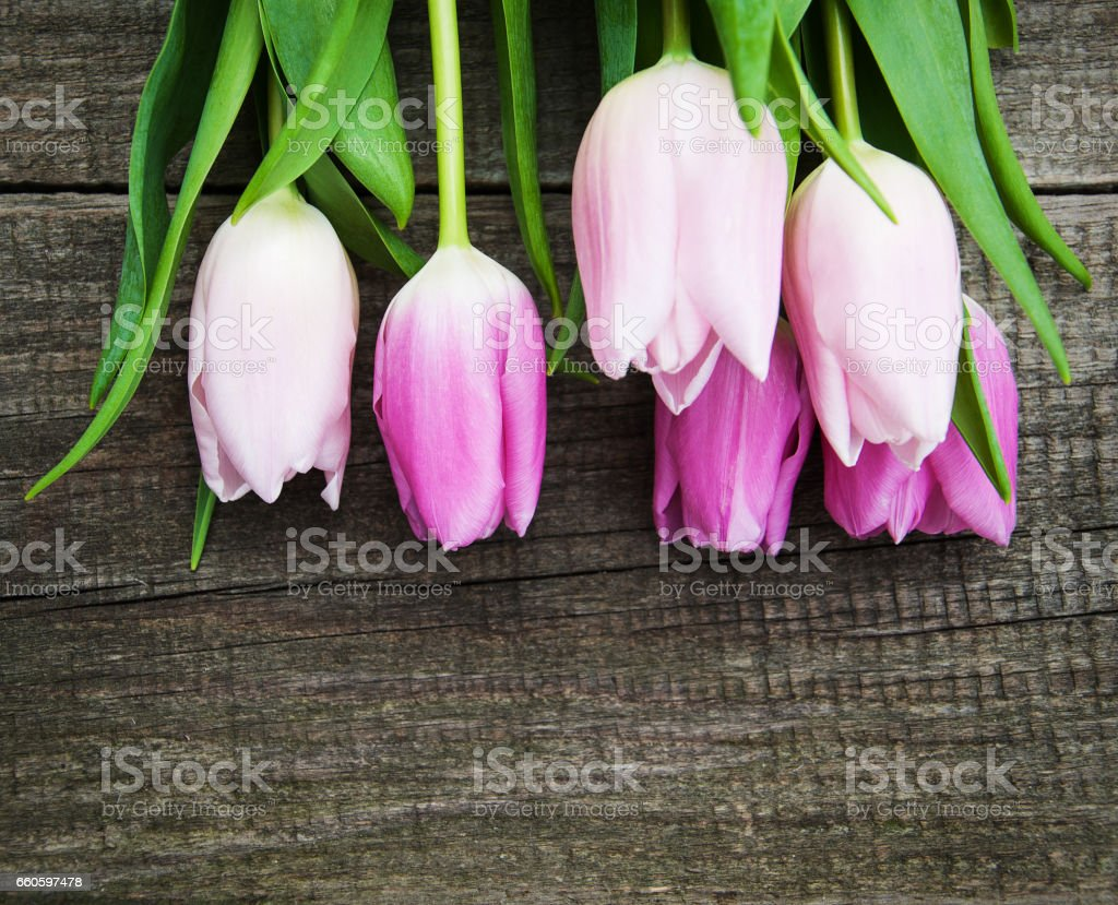 Spring tulips flowers royalty-free stock photo