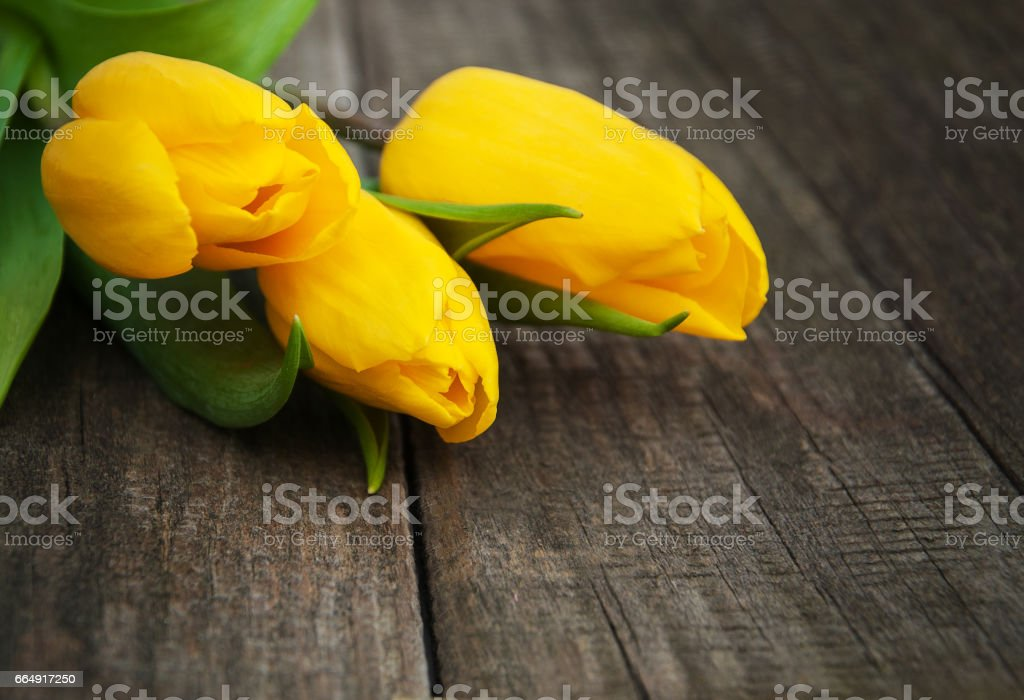 Spring tulips flowers foto stock royalty-free