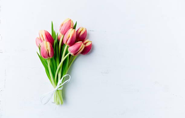 beyaz boyalı ahşap arka planda bahar lale. düz yatıyordu. boşluk kopyala - i̇stanbul stok fotoğraflar ve resimler