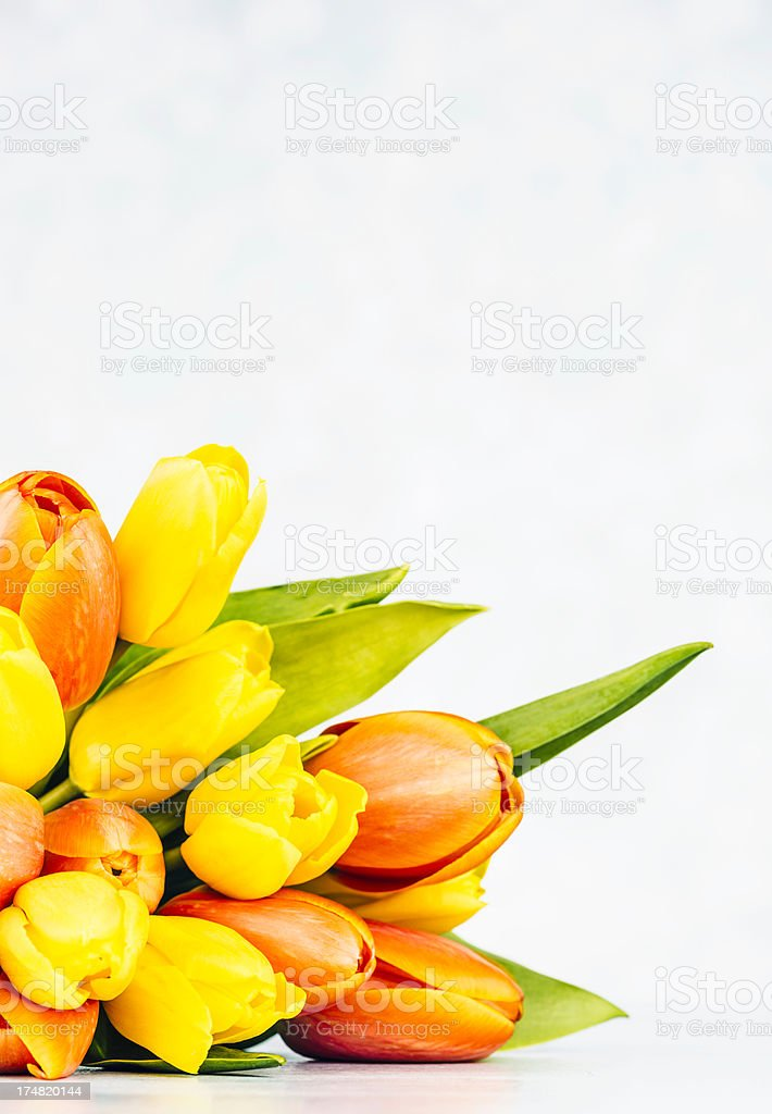 Spring Tulips with Copy Space royalty-free stock photo
