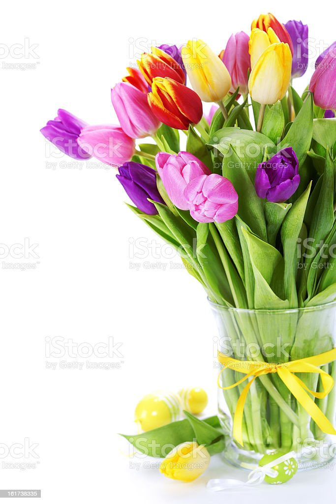 spring tulipswith easter eggs isolated on white background royalty-free stock photo