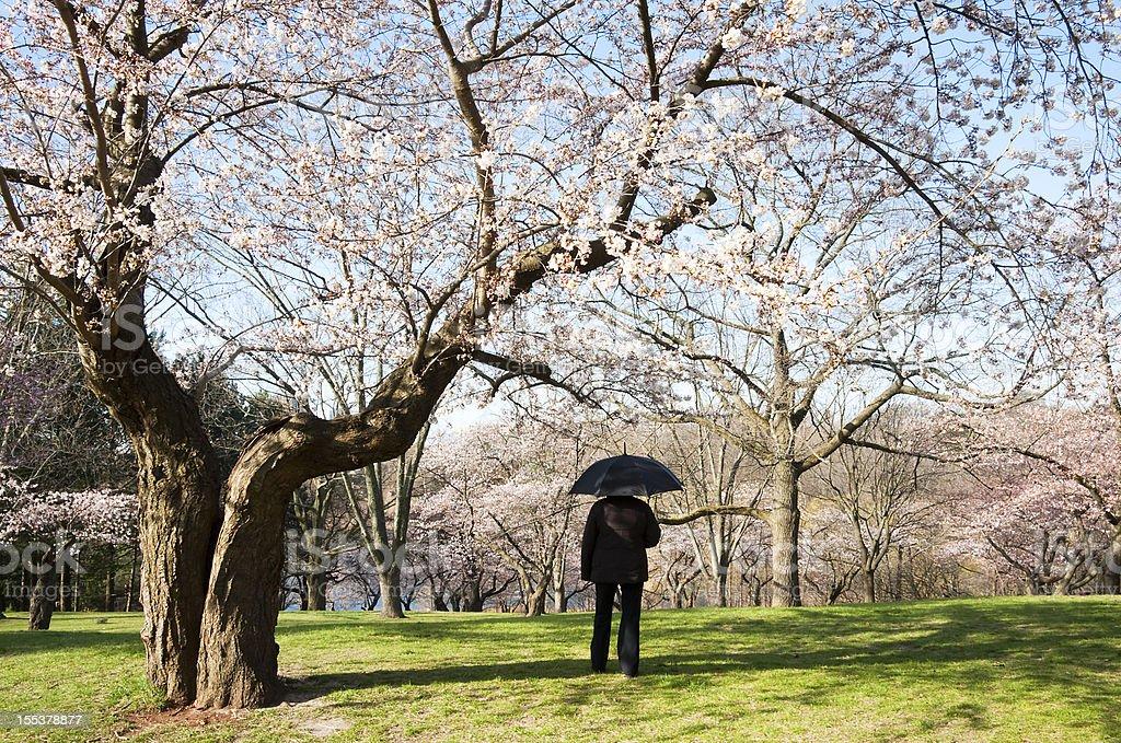 Spring Umbrella High Park Series royalty-free stock photo